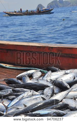 Nha Trang, Vietnam - May 5, 2012: Tuna Caught By Trawl Net In The Sea Of Nha Trang Bay