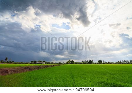 Landscape Of Green Field With Sun Rays And Lens Flare