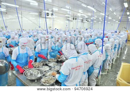 Phan Rang, Vietnam - December 29, 2014: Workers Are Peeling And Processing Fresh Raw Shrimps In A Se