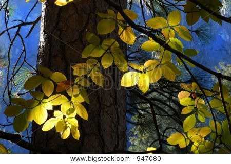 Sun Streaming Through Forest Lighting Leaves Of A Tree