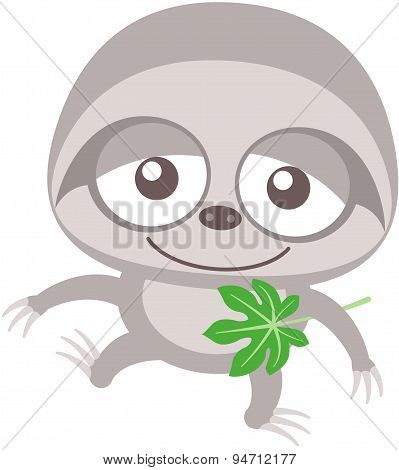 Cute baby sloth walking unsteadily and holding a cecropia leaf