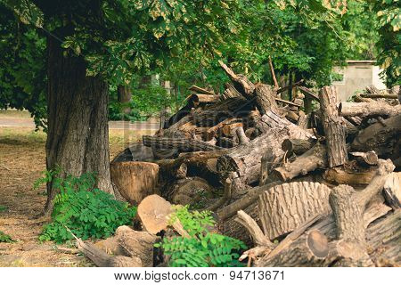 Cut Branches, Logs And Stumps Lying In The Park Under A Big Green Tree