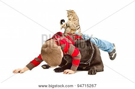 The boy, dog and cat fun playing together