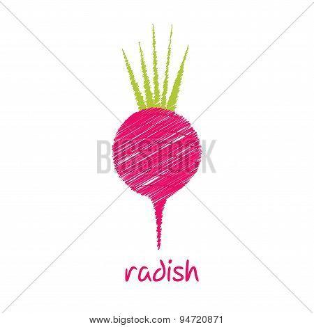 radish, sketch design