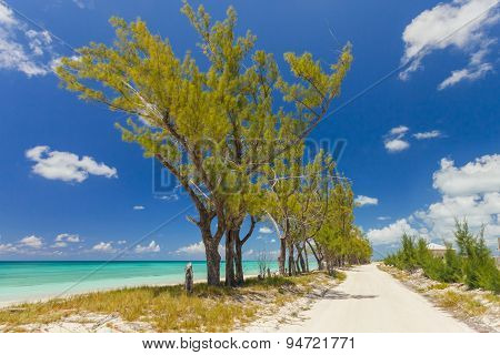 Image Of Trees Along A Pathway On The Beach