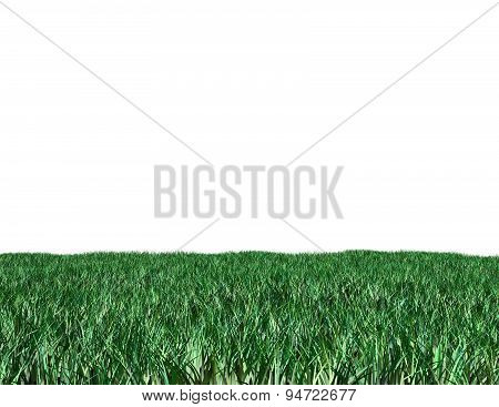 Green Grass Isolated On White Illustration