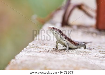 Salamander Stands Tall