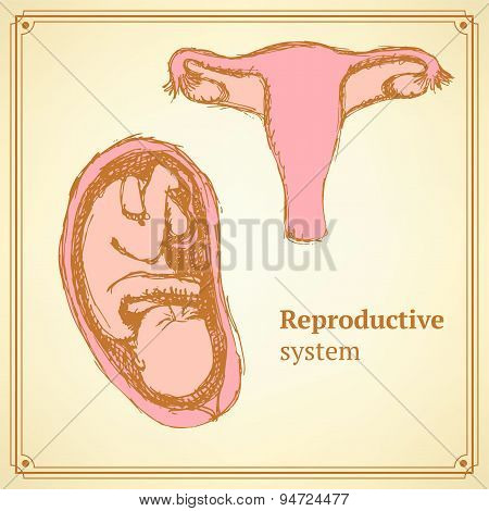 Sketch Reproductive System  In Vintage Style