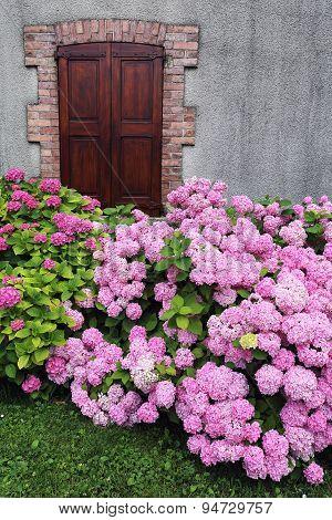 Flowering Hydrangea, Village Life