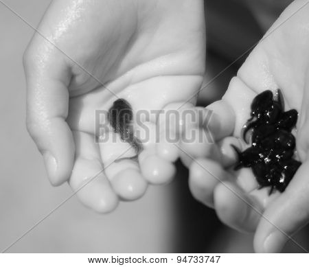 Hand Of Child With Many Black Tadpoles