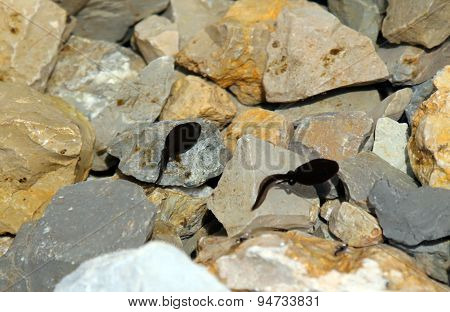 Two Black Tadpoles In The Pond With Rocks In The Mountains
