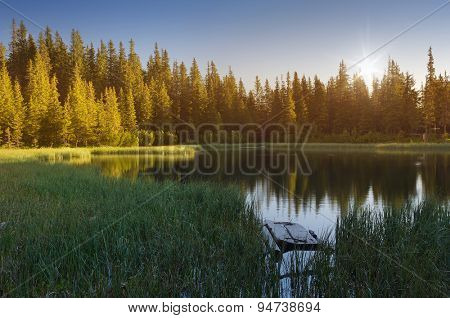 Forest landscape with a lake. Sunny morning in the mountains