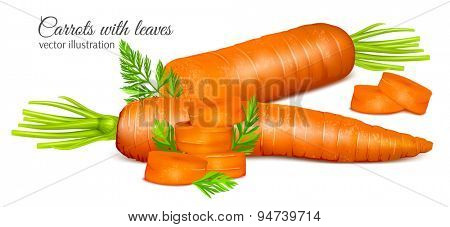 Carrots with leaves and carrot slices. Vector illustration.