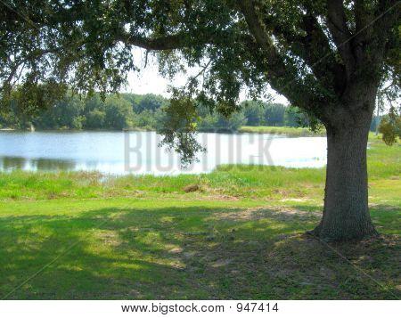 Picnic Area At The Lake