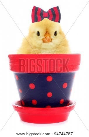 Cute chick with hair bow tie in lovely flowerpot