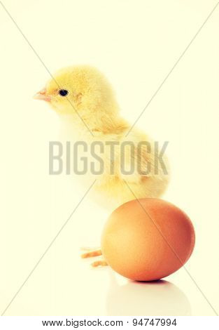 Small yellow chicken and egg.