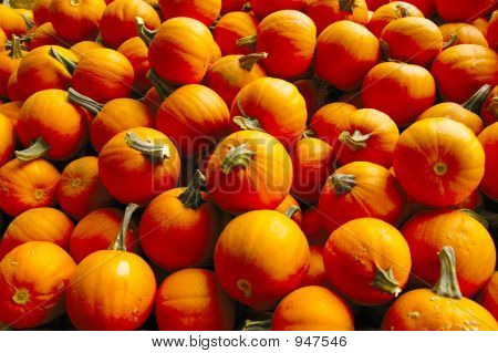 Pumpkins For All