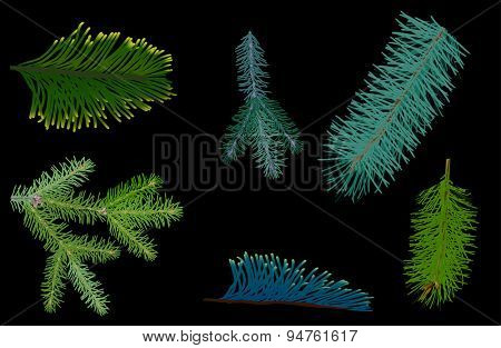 illustration with green coniferous branches isolated on black background