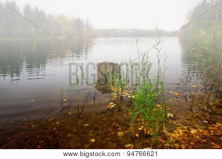 autumnal lake near the forest in gloomy and foggy weather