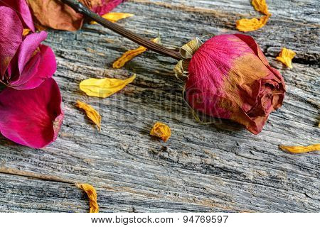 Dried rose on rustic table