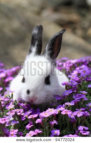 Black And White Rabbit In The Flowers