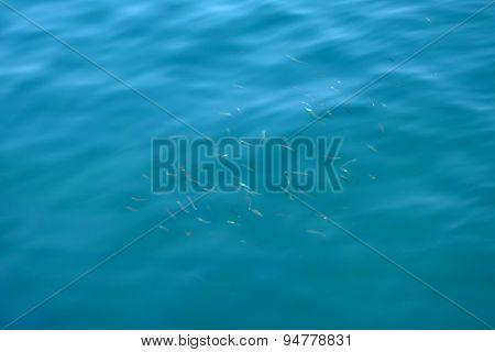 Blue Sea Surface