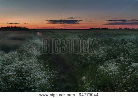 Sunset farm cereal field and flood-meadow with foggy drainage ditch