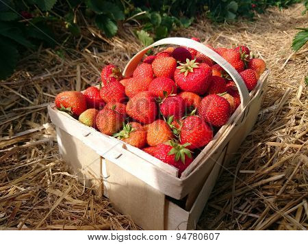 Image Of The Strawberries In A Basket