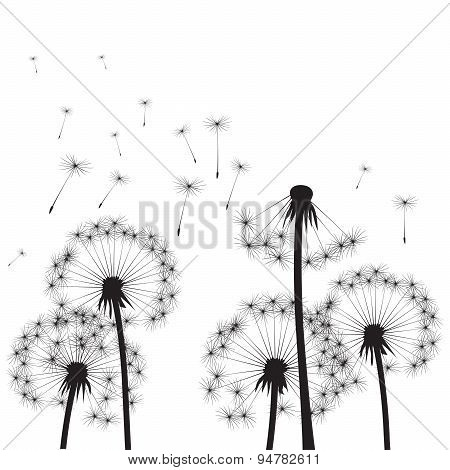 Dandelions and Wind.