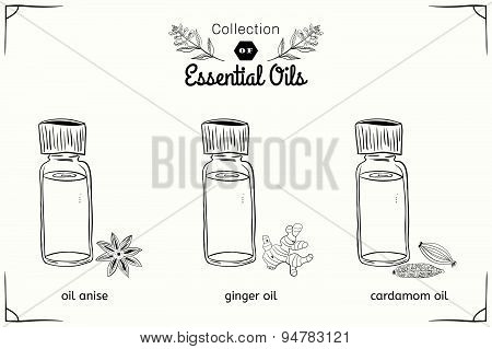 A set of essential oils in black and white style: anise, cardamom, ginger.