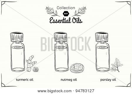A set of essential oils in black and white style: nutmeg, parsley, turmeric.