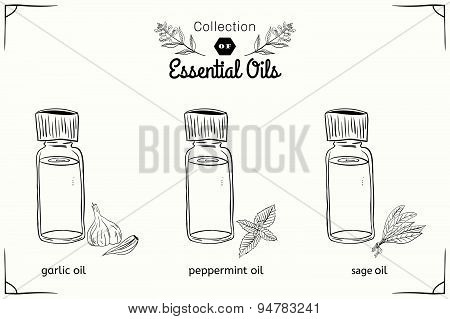 A set of essential oils in black and white style: mint, garlic, sage.