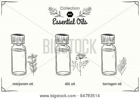 A set of essential oils in black and white style: marjoram, dill, tarragon.