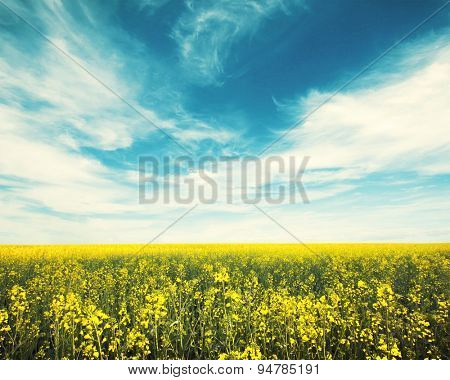 Large beautiful spring  field with  sky