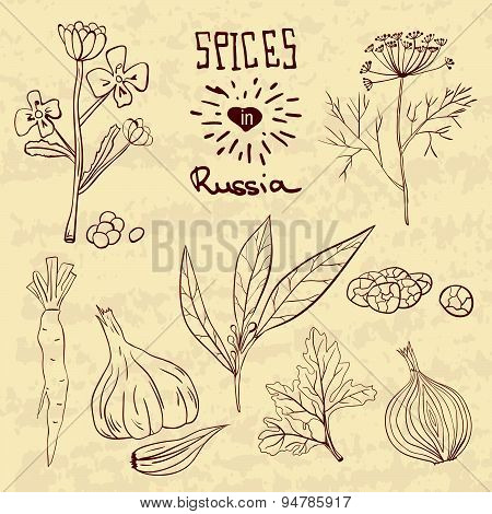 Spices in Russia. A collection of distinctive spices for the Russians.