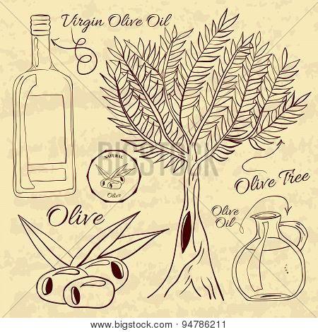 Hand drawn illustration of a set olive. Web Elements