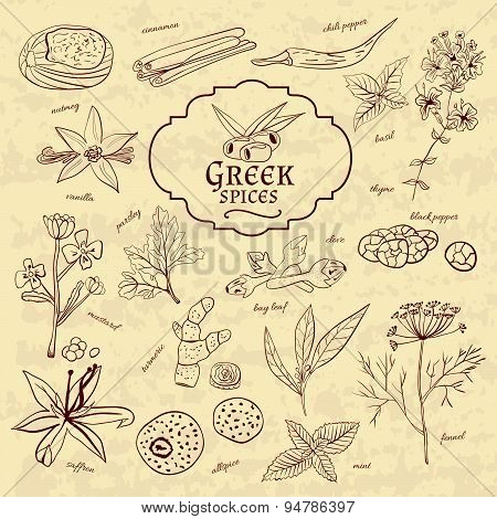 Set of spices cuisines Greece on old paper in vintage style.  illustration