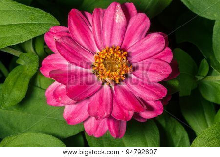 Long Pink Flower With Yellow Center