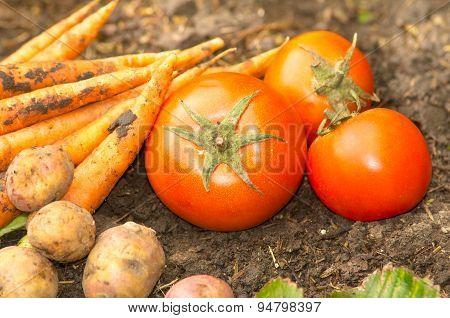 Vegetables displayed on soil