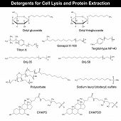 stock photo of detergent  - Detergents formulas for cell lysis and protein extraction - JPG