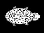 image of terrapin turtle  - graphic black white turtle ethno style - JPG