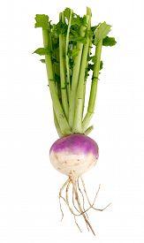 picture of turnip greens  - organic purple top turnip over white background - JPG