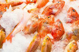 stock photo of red snapper  - Red snapper fish in wet market - JPG