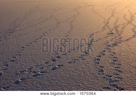 Bird Footprints