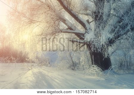 Winter landscape with frosty winter tree in the sunlight. Winter wonderland picturesque scene in cold winter morning with winter soft sunshine- view of winter forest in the morning. Winter background