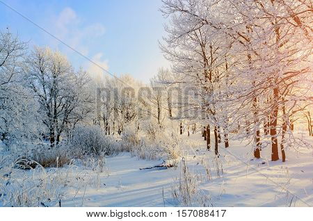Winter background with frosty trees in winter forest in sunny weather. Winter landscape. Winter scene with idyllic winter nature in sunlight -winter landscape with Christmas and New Year mood