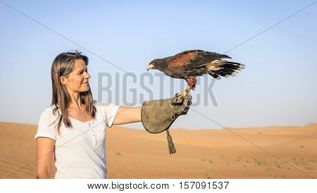 Harris Hawk sits on a woman's hand at Dubai Desert Conservation Reserve, UAE