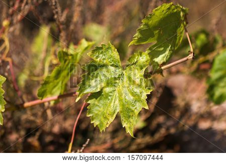 tree, outdoor, green, climbing, leaf, summer, flora, wood, ivy, forest, growth, plant, trunk, nature, detail, botany, foliage, poisonous, nobody, natural, grow, horizontal, botanical, growing, vine, wall, toxic, texture, color, colorful, log, weed, poison