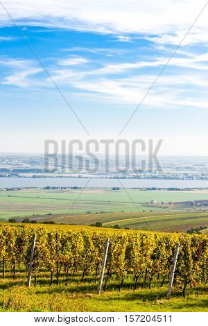 view of autumnal vineyards near Palava, Czech Republic