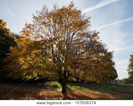 NEWSTEAD NOTTINGHAM - NOVEMBER 2: Contre-jour image of tree in autumn Newstead Abbey. In Newstead Abbey Newstead Nottinghamshire England. On 2nd November 2016.